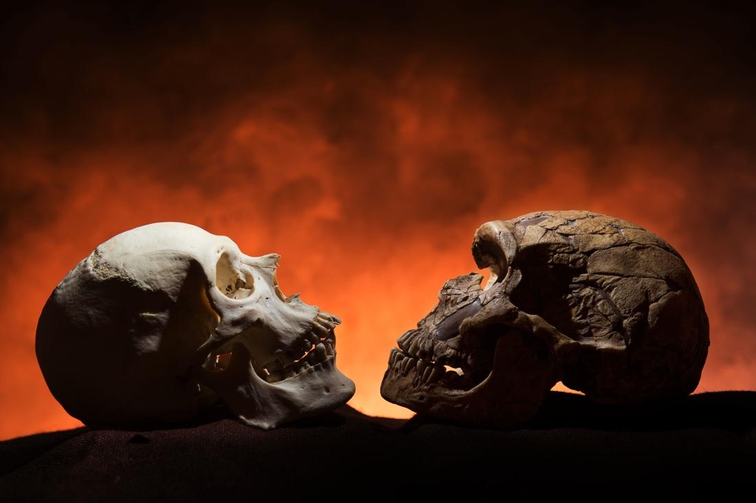 Neanderthal vs CroMagnon skull